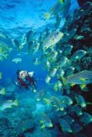 Thumbnail The Scuba Diving Chick With Personal Use Only